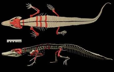 Descubren restos de un cocodrilo de 148 millones de años